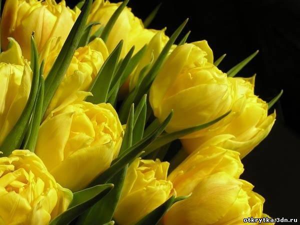 поздравление с 8 марта картинка красивая