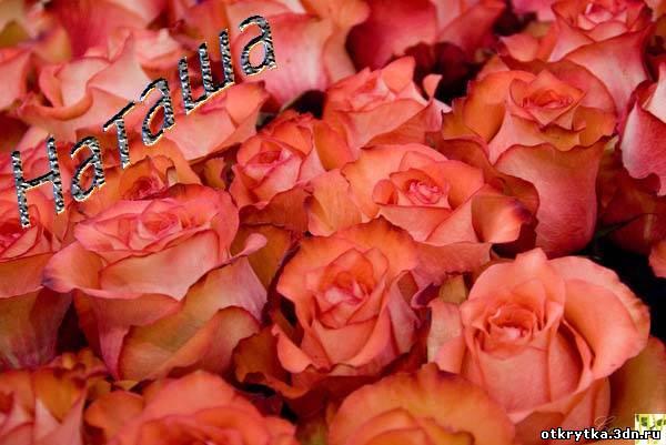 Открытка розы для наташи с днем 444