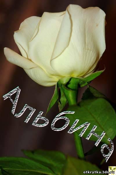Поздравление на имя розы 838