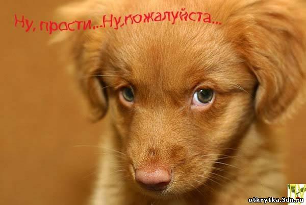 К чему снится рыжий щенок женщине