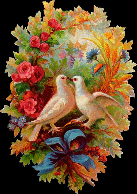 Открытка для друга птицы