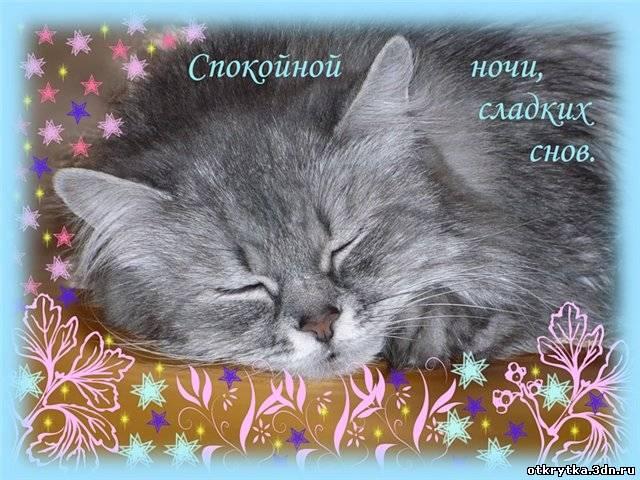 Спокойной ночи и сладких снов открытка 46